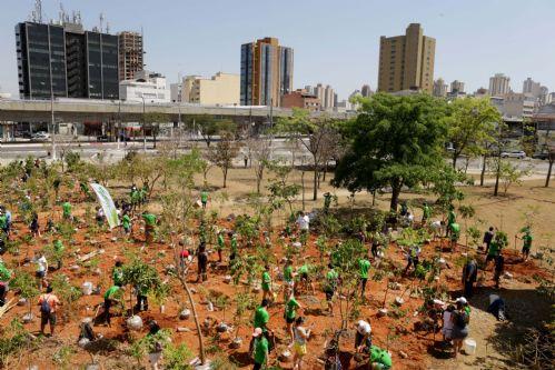 Verdejando no Parque da Juventude